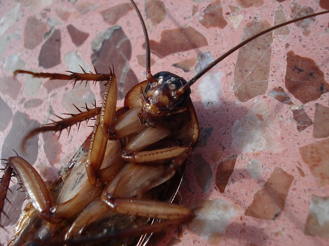 Some tips on how to get rid of cockroaches from kitchen