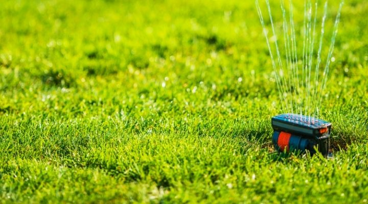 Top Lawn Care Wars – Sod vs. Seed for New Yard Grass