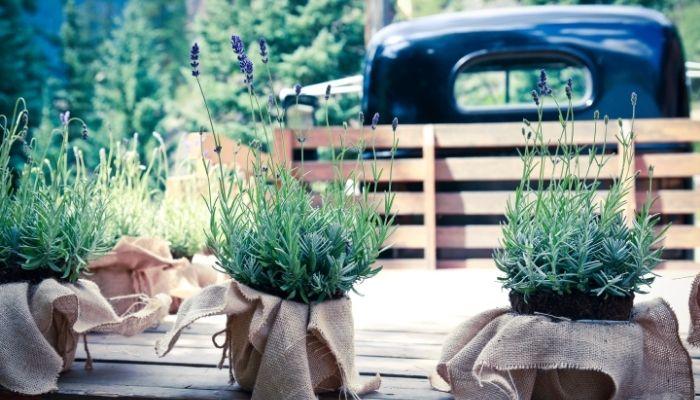 pot-for-lavender