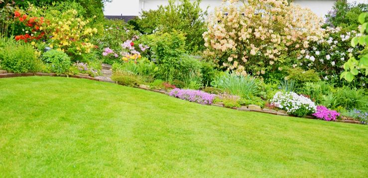 To Sod, Or Not? The Pros and Cons of Grass Seed vs. Sod for Your Lawn
