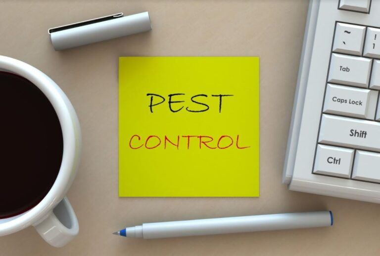 Call Pest Control! 7 Warning Signs of Bed Bugs