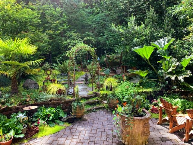 Backyard-Beauty