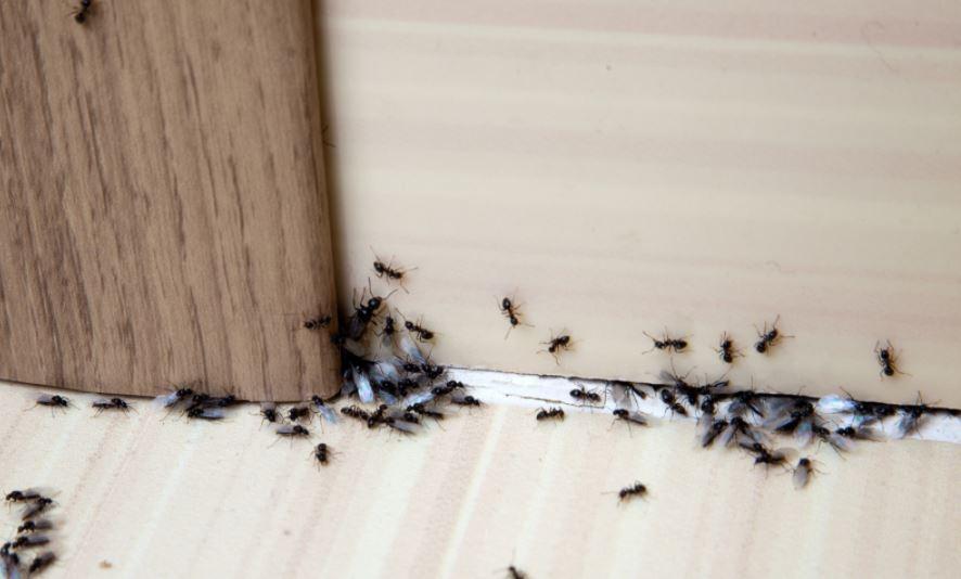 pest-problem