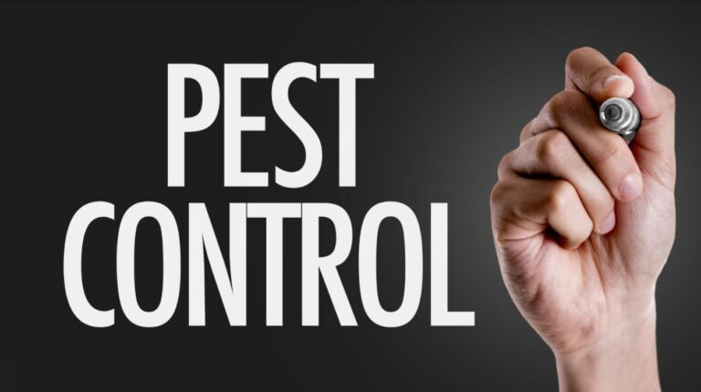 5 Different Ways To Do Pest Control