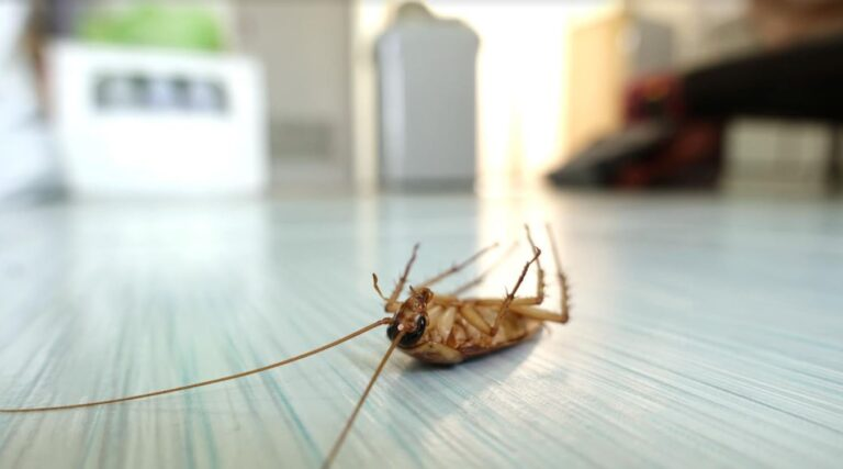 How to Know If Your Home Has a Pest Problem