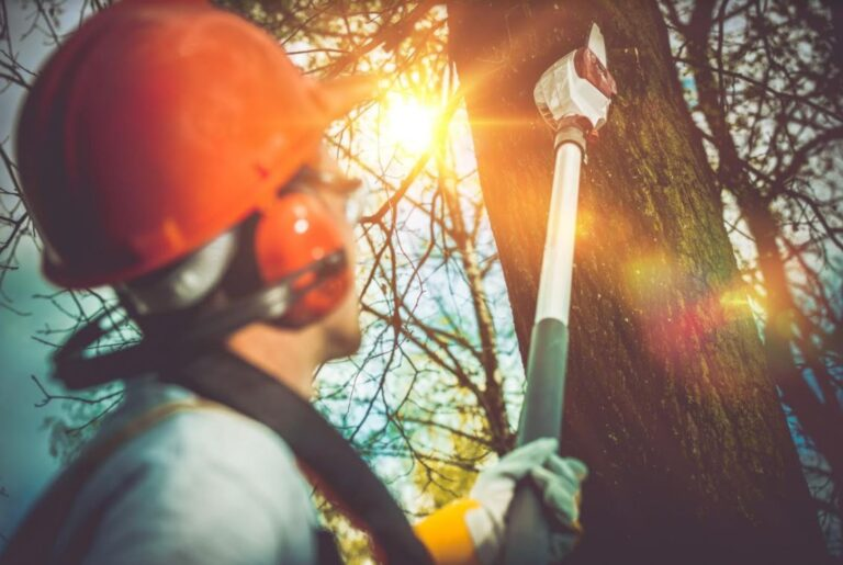 How Much Does It Cost to Remove a Tree From Your Property?