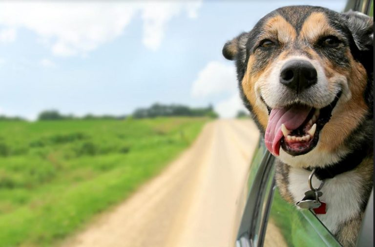 5 Things to Do Before Bringing a New Dog Home