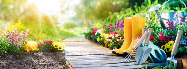 Beginner Garden: How To Grow Your Own