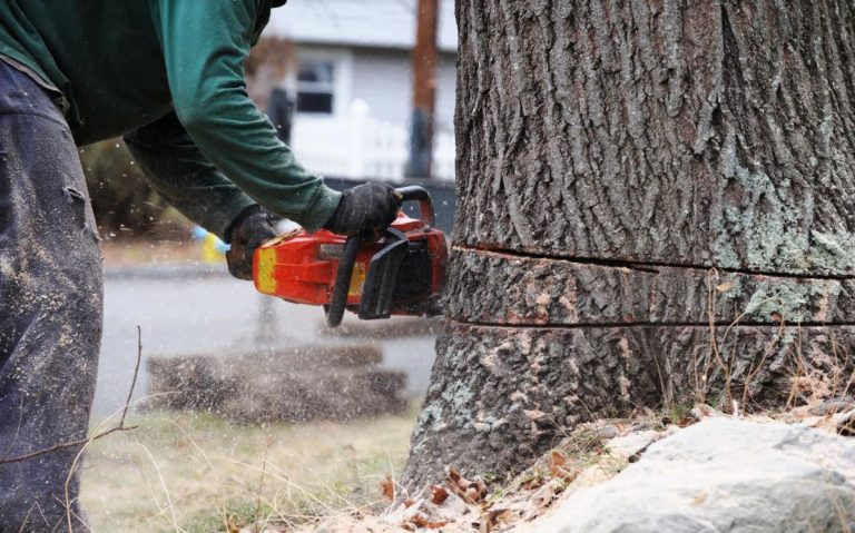 How Do I Choose the Best Tree Cutting Service in My Local Area?