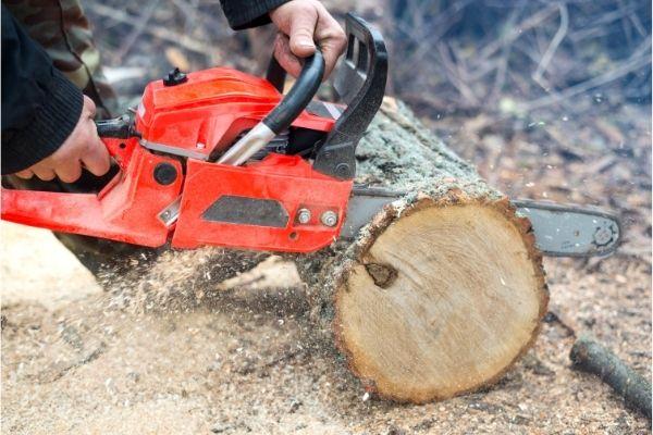 How Tree Service Companies Work