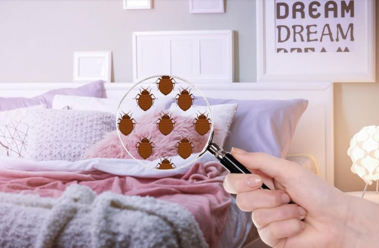 5 Common Signs You Have Bed Bugs in Your Home