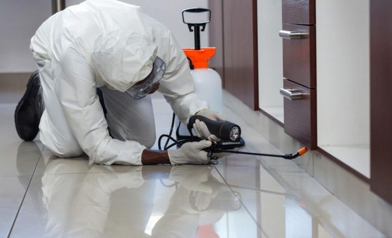 5 Signs It is Time to Hire Pest Control Services