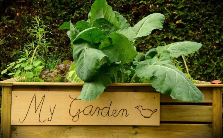 A Cut Above the Rest: 5 Amazing Raised Garden Designs