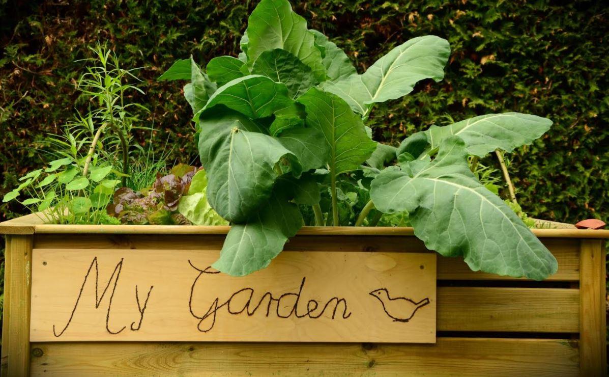 raised-garden-designs