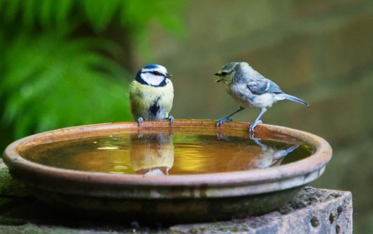 How To Make a Bird Bath in Your Garden