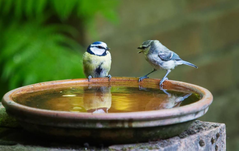 Bird-Baths