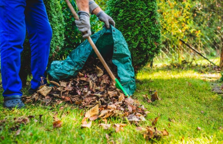 How To Clean Up Your Yard After A Landscaping Project